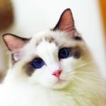 孕妇梦见被猫咬是什么意思