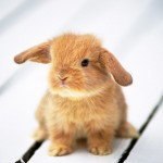 孕妇梦见抓很多兔子是什么意思