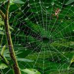 孕妇梦见大蜘蛛网缠身是什么意思