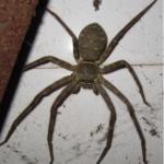 梦见很多大蜘蛛在身上爬是什么意思