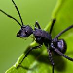 梦见成群蚂蚁爬到身上咬自己是什么意思