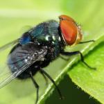 梦见打很多苍蝇是什么意思