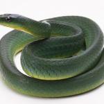 2015年属蛇人的婚姻与命运
